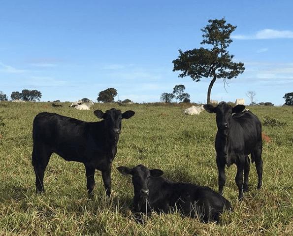 suplemento mineral para bovinos