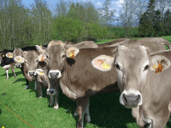 Prevenção é a melhor forma de zelar pela saúde dos animais e evitar a tripanossomose bovina