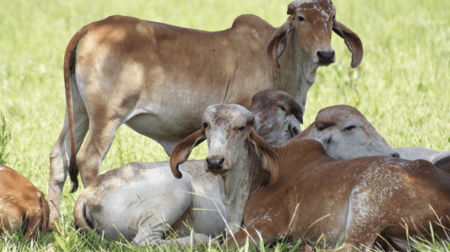 Controle financeiro da propriedade rural