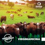 Virginiamicina: saiba tudo sobre o composto