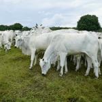 O que é eficiência alimentar dos bovinos?