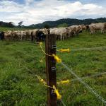 O que é e como fazer pastagem rotacionada para gado