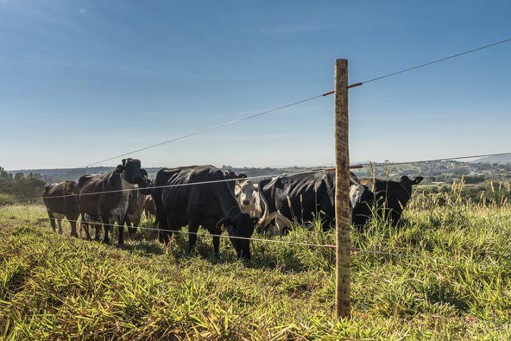Cerca elétrica para gado