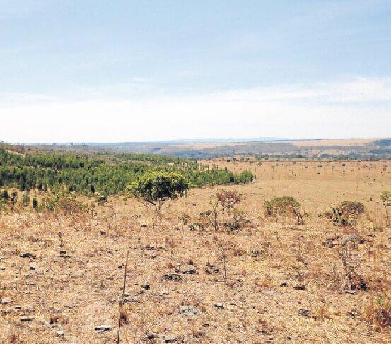 degradação do pasto