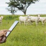 Desenvolvimento da pecuária: qual o papel da tecnologia?