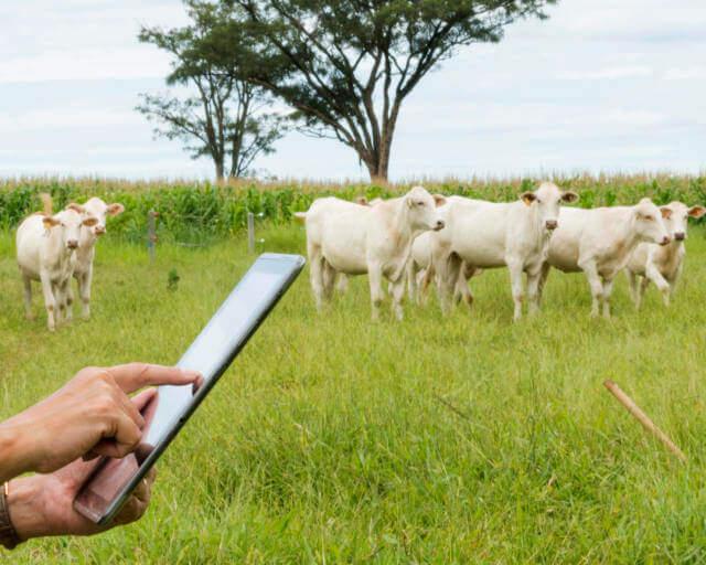 desenvolvimento da pecuária