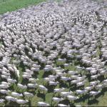 Como ter alto lucro na produção de gado de corte?