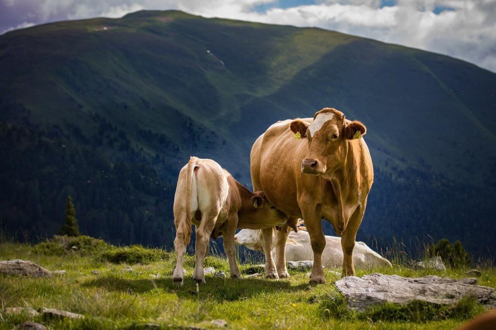 Virginiamicina: vacas de cria manejo pré e pós-parto
