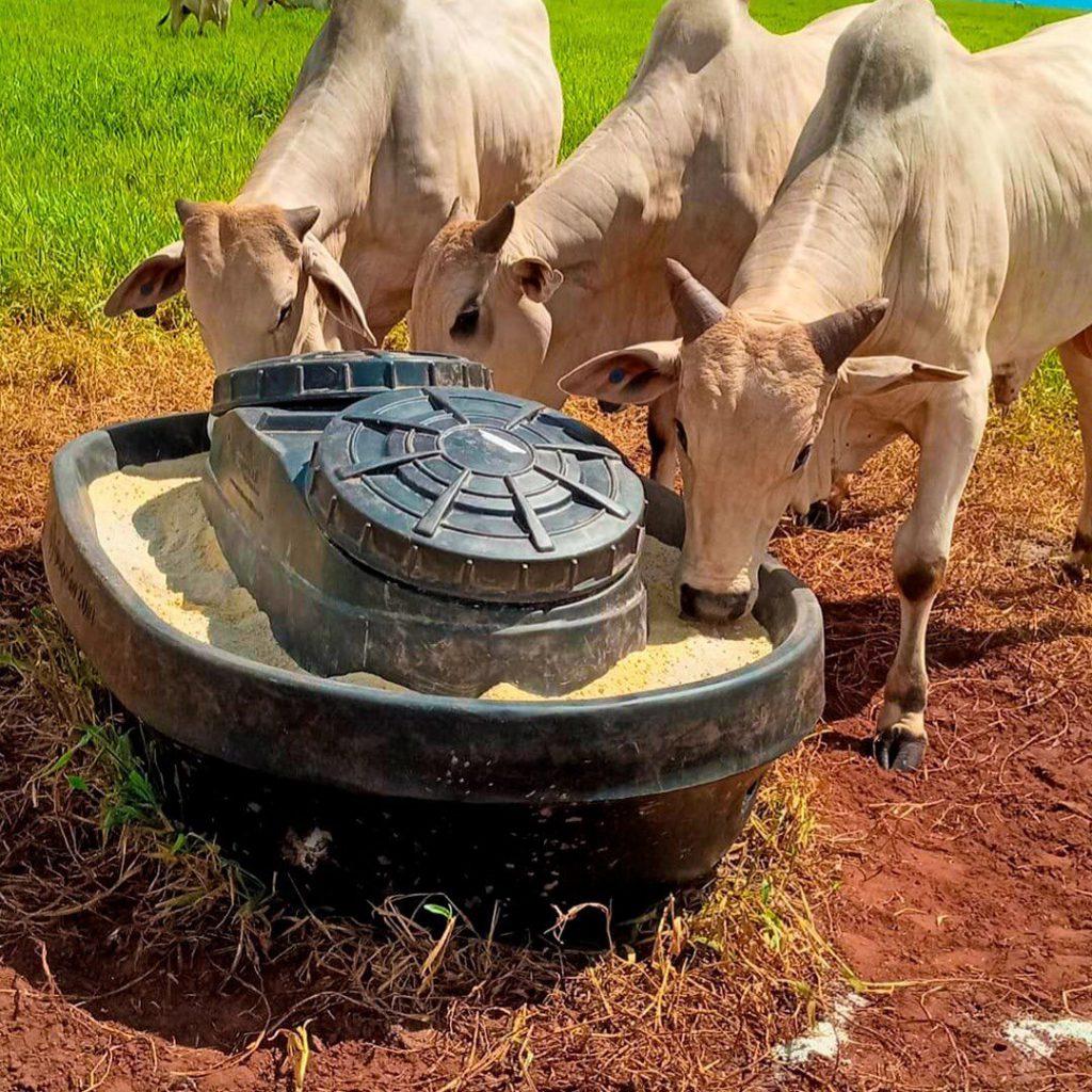 cocho para gado de plástico