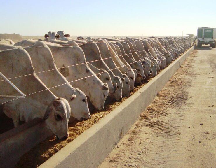 confinamento de bovinos