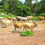 Alimentação de bovinos na estação seca: princípios e procedimentos
