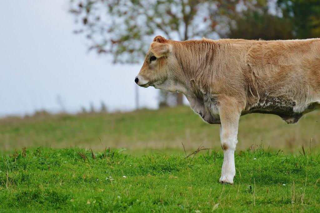 Propriedade e suplemento para bovinos na seca