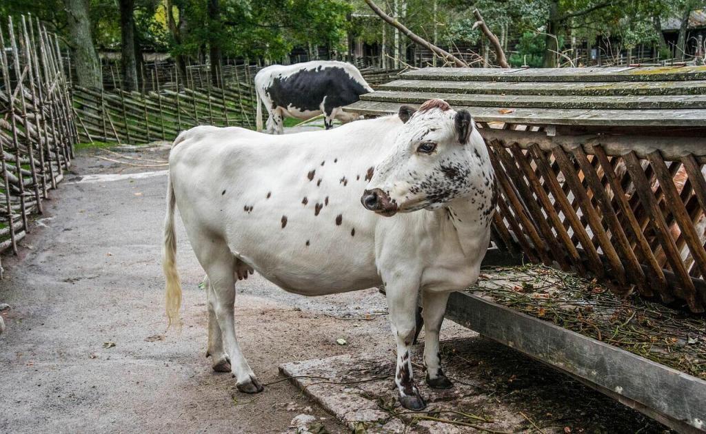 seleção de matrizes bovinas