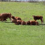 Parasitas em bovinos: como controlar piolhos