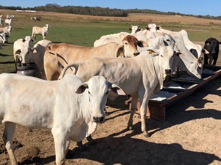 sal mineral para bovinos água