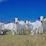 Ração para bovinos na seca: horários têm influência?