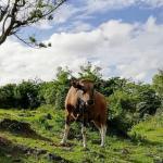 Casos de febre aftosa no Brasil