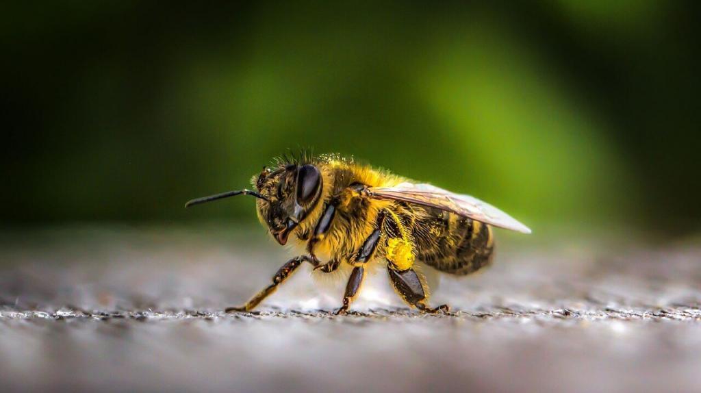 Como evitar o acúmulo de abelhas no cocho de animais?