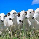 Como produzir carne para exportação