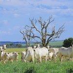 Coronavírus em animais: existe transmissão?
