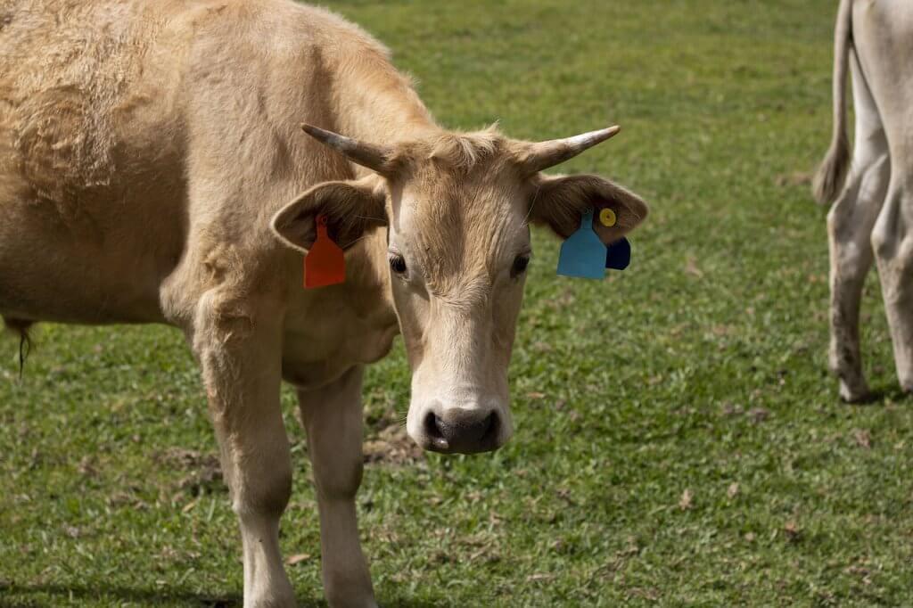 Tamanho da propriedade rural para criação de bovinos