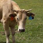Criação de bovinos: tamanho da propriedade rural