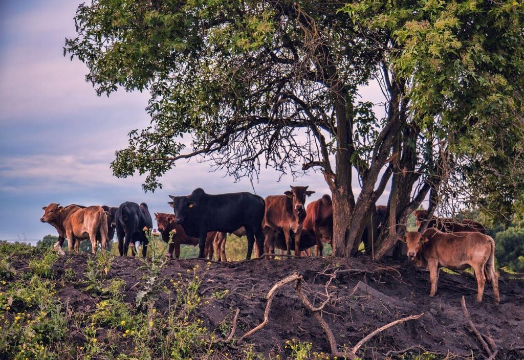 frame bovino