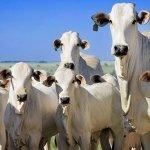 Como será o futuro do agronegócio?