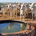 Consumo de água na pecuária: saiba o impacto