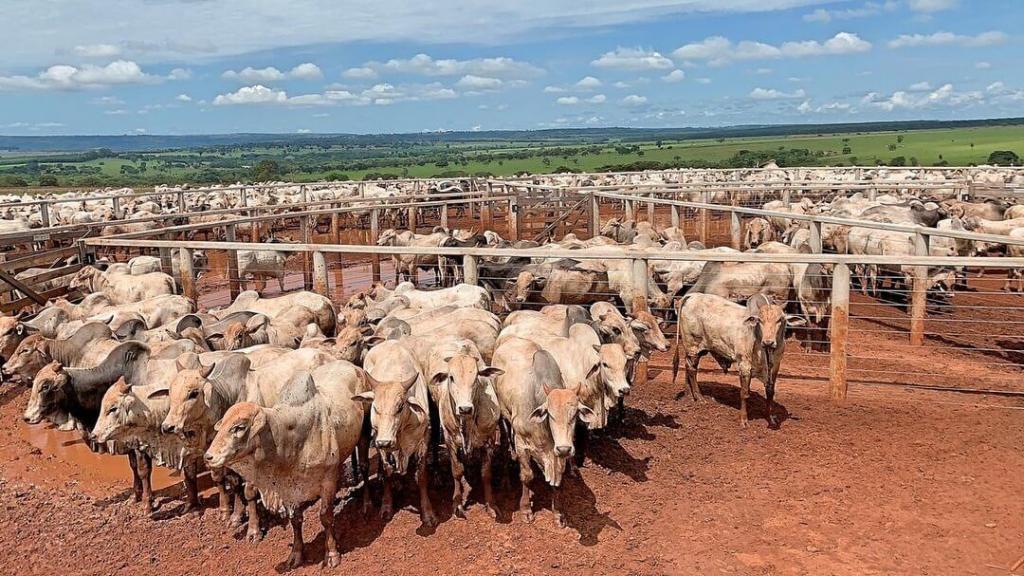 gado confinado