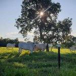 Nitrogênio: cuidados com o gado, o que é e para que serve
