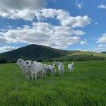 Taxa de lotação de pastagens: quantos animais por lote?