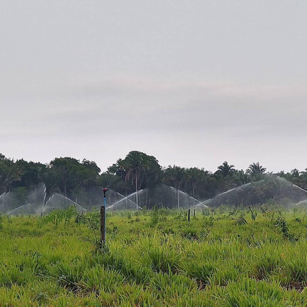 Irrigação de pastagem por aspersão: conheça os tipos