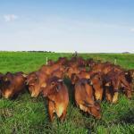 Quantidade de adubo por hectare de pastagem