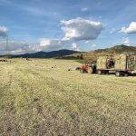 Plantação de feno na propriedade é boa alternativa?