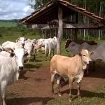 Tipos de sal bovino: qual o melhor para o gado?