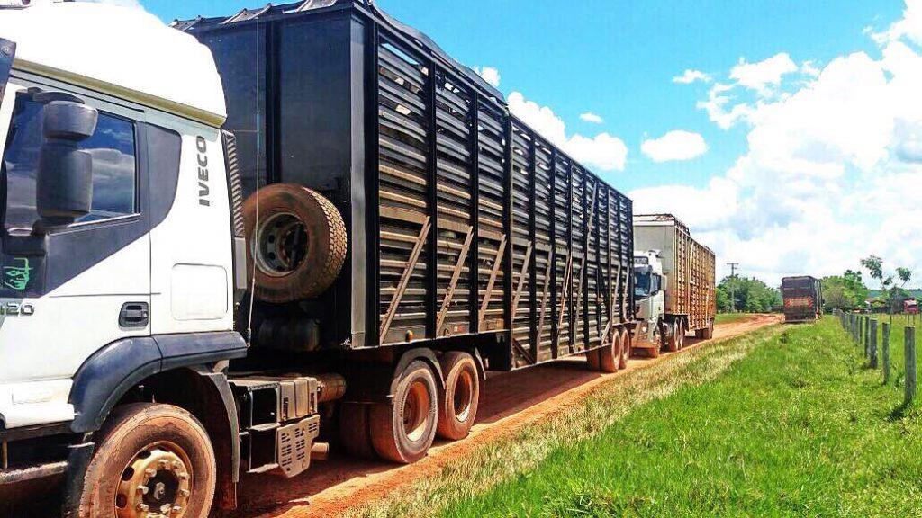 transporte de boi gordo