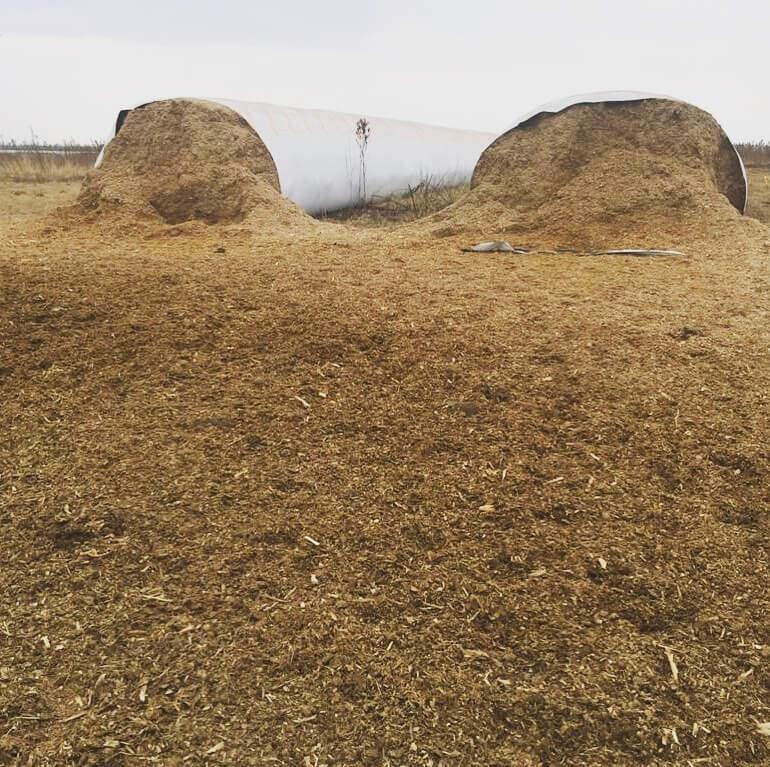 produção de silagem para gado
