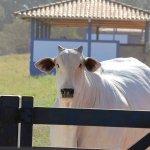 Administração rural: mantenha em dia as finanças da propriedade