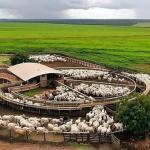 Curral para bovinos: dicas para melhorar sua produção