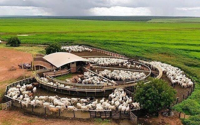 curral para bovinos