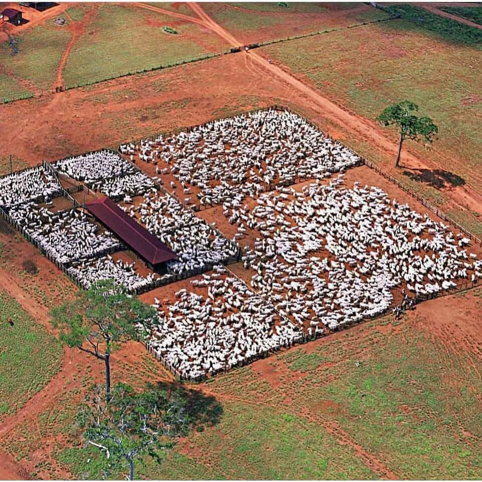 curral para gado de corte