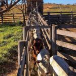 A importância do brete na propriedade rural