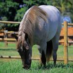 Capim para cavalo: qual é o ideal e o que deve ser evitado?