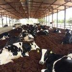 Devo ter uma cobertura de galpão para o gado?