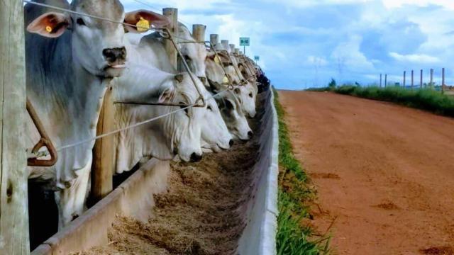5 dicas para criar gado confinado e melhorar a produtividade