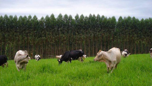 Como promover uma pecuária sustentável?