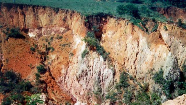 Erosão do solo prejudica a pastagem dos bovinos?