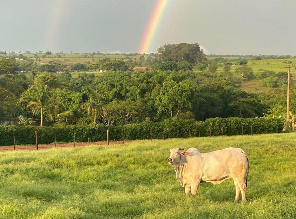 pasto de gado