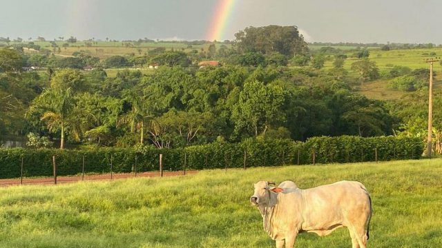 5 dicas para cuidar e manter seu pasto de gado em dia